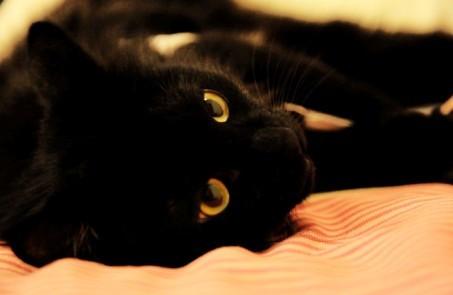 小黑--黑豹般